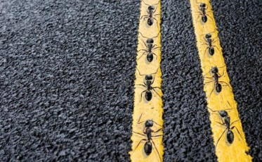 traffic_from_insects_to_interstates1