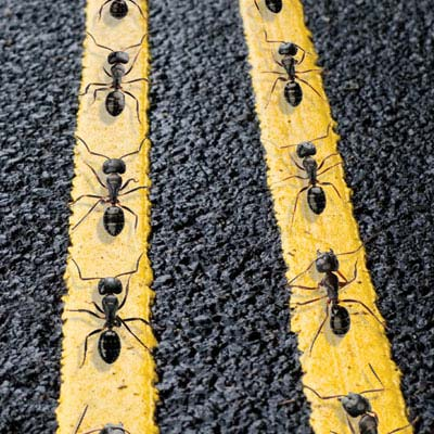 traffic_from_insects_to_interstates