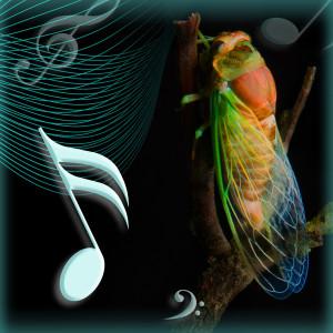 cicada_serenades
