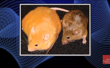 of_mice_and_men_a_breakthrough_study_in_epigenetics