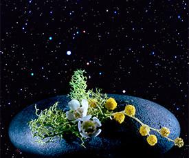 2014_astrobiology_275