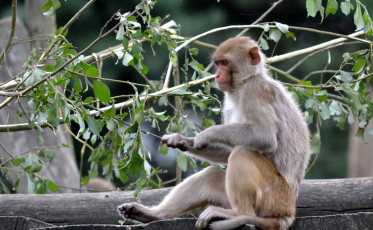 monkey 800x494