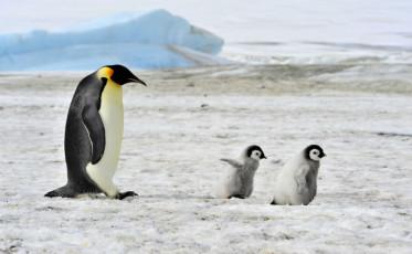 Penguins- Dreamstime