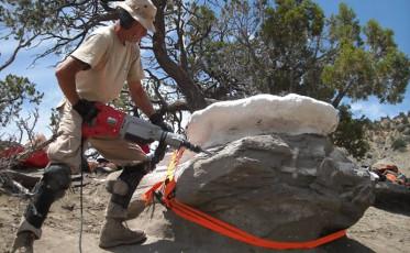 "Excavating the bones of the baby Parasaurolophus nicknamed ""Joe""."