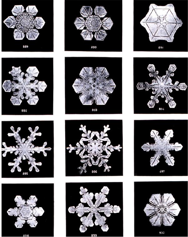 snowflakefig1