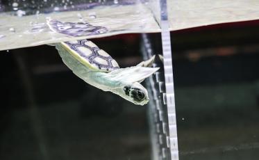 turtle_800