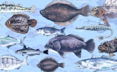great fish count_800x494