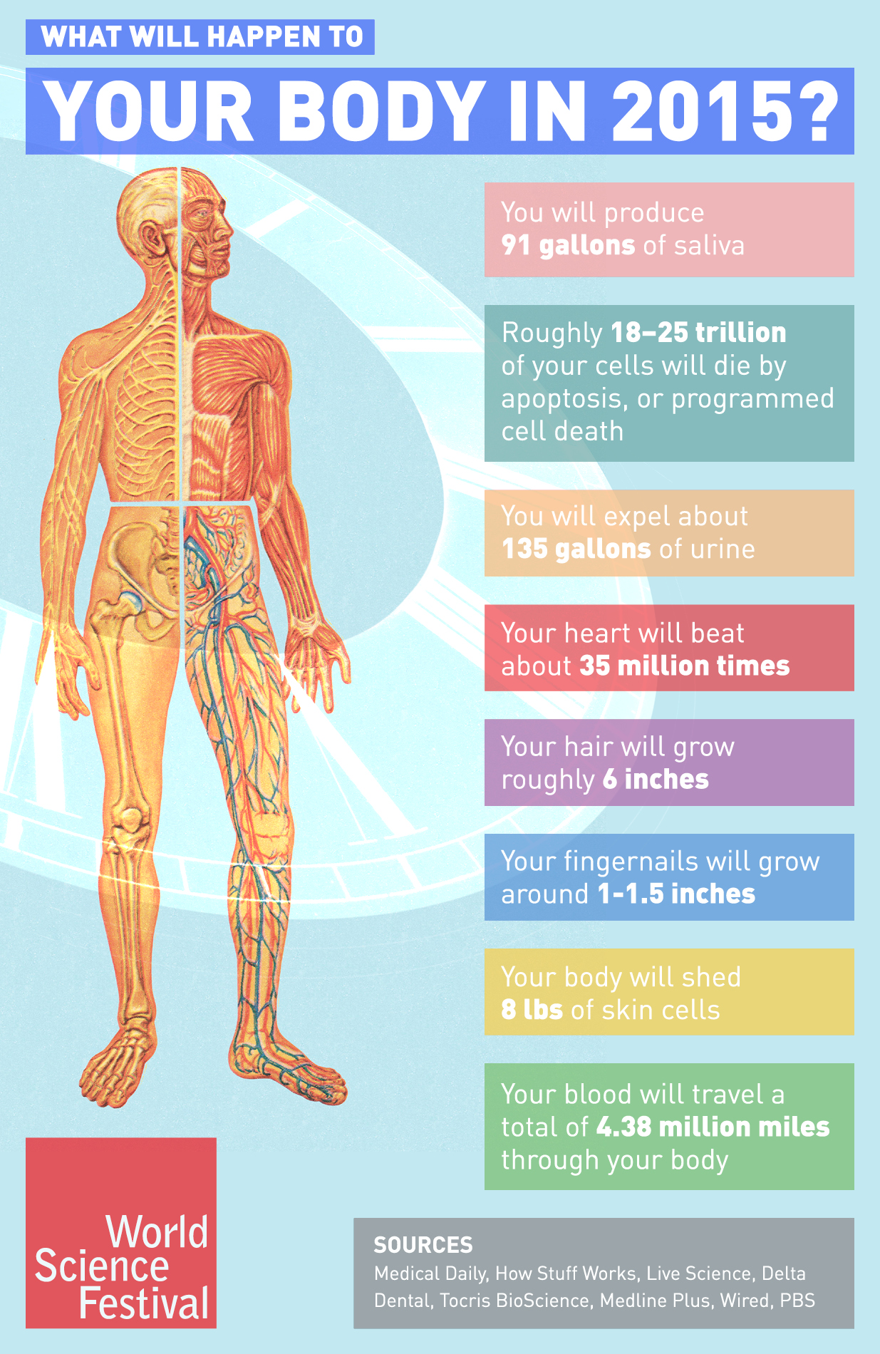 What Will Happen to Your Body in 2015? | World Science ...