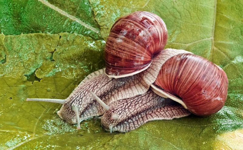 snails_800x494